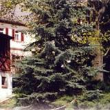 004_buergerhaus_gladitz.jpg