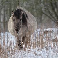 IMG_8766.jpg.jpg ©Andreas Nowack